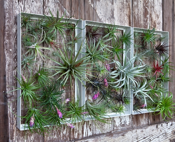 vertical gardens with air plants